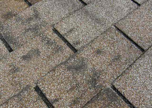 Granuals missing from Shingles